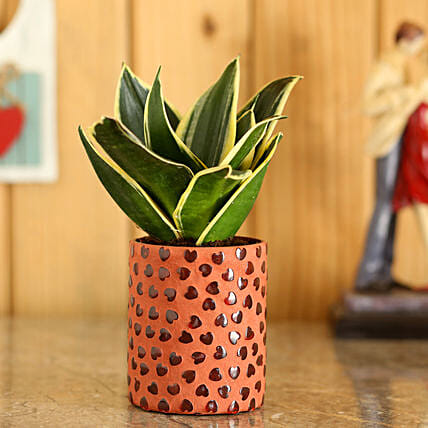 Sansevieria Plant In Red Hearts Planter: Succulents and Cactus Plants