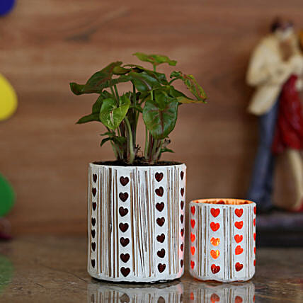 Syngonium Plant & Red Hearts Votive Holder: Spiritual Plant