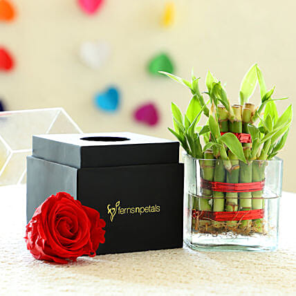 Forever Rose & 2 Layer Bamboo: Buy Indoor Plants