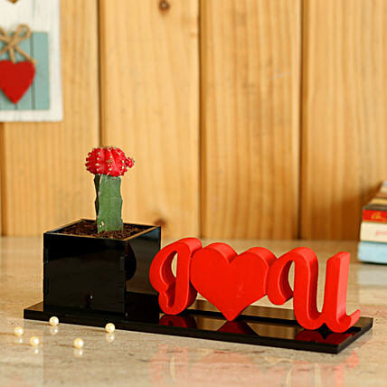 I Love You Red Moon Cactus Plant: Potted Plants