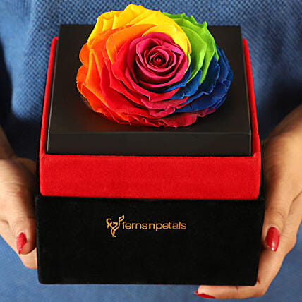 Big Forever Rainbow Rose in Black Velvet Box: Valentines Day Flowers