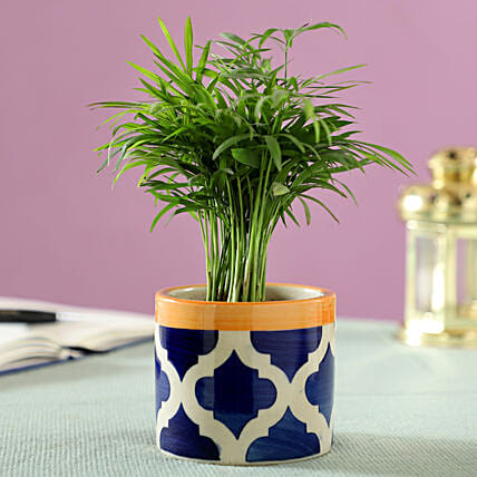 Chamaedorea Palm Plant in Blue Ceramic Pot: Air Purifying Plants