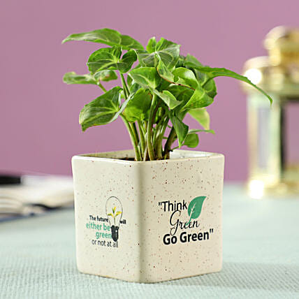 Green Syngonium Plant in Ceramic Pot: Buy Indoor Plants