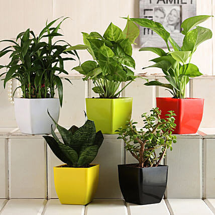 Grand 5 Green House Plant Set: Gift for Father's Day