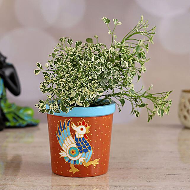 Aralia Plant In Handpainted Terracotta Planter: Gift For Karwa Chauth