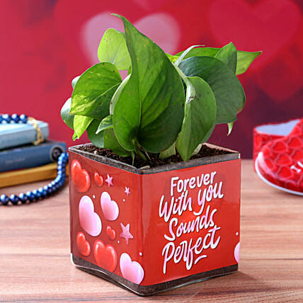Money Plant In Forever With You Sounds Perfect Sticker Vase- Hand Delivery: Valentine Gifts