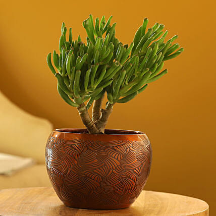 Euphorbia Sticks Plant In Textured Orange Pot: Valentine Gifts