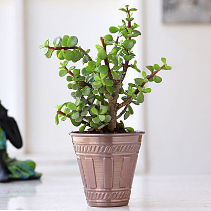Jade Plant In Red Copper Pot: Valentine Gifts