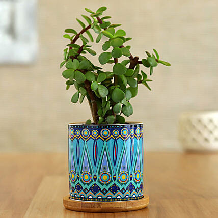 Jade Plant In Green Rangoli Pot With Wooden Plate: Send Holi Gifts