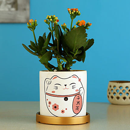 Kalanchoe Plant In Cat Print Pot With Golden Plate: Holi Gifts
