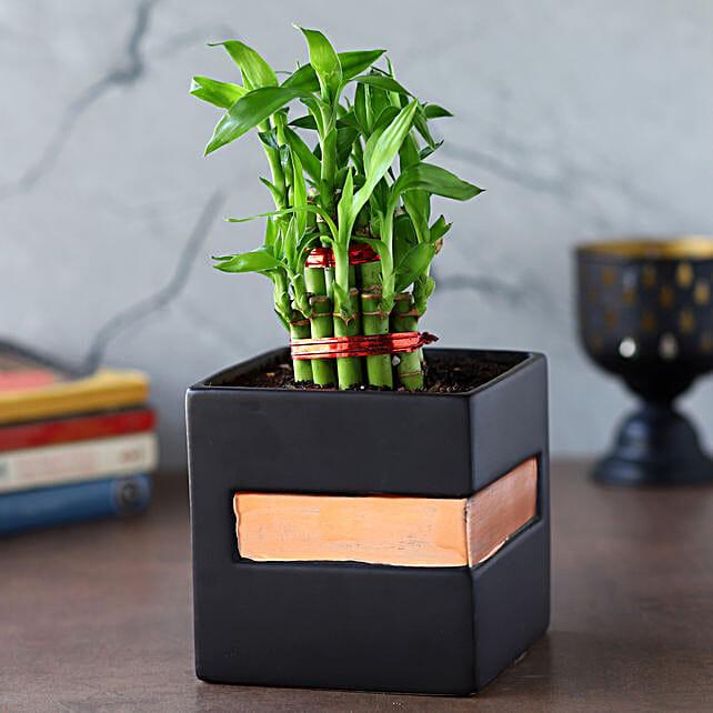 2 Layer Bamboo Plant In Black Orange Square Pot: Send Holi Gifts