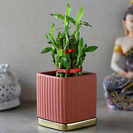 2 Layer Bamboo Plant In Mauve Gold Plate Pot: Send Holi Gifts