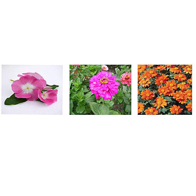 Vinca Zinnia & Tithonia Seeds Combo: Flowering Plant-seeds