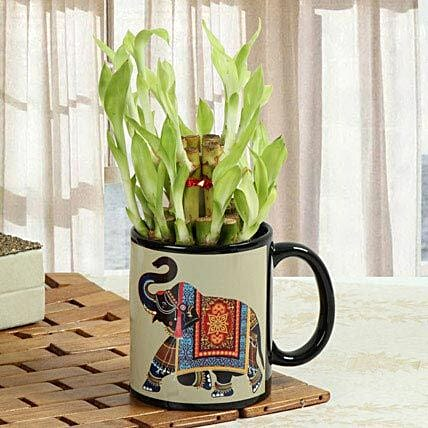 Lucky Bamboo In Printed Mug: Mother's Day Gift Delivery in UAE