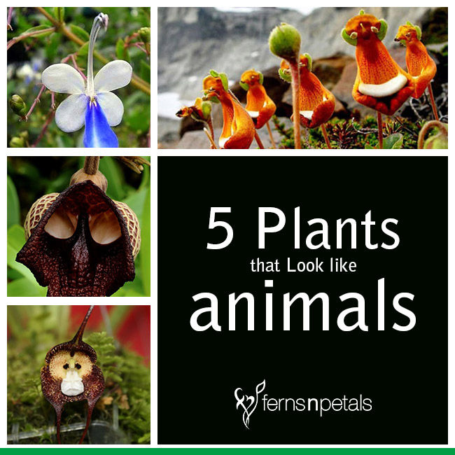 Plants that Look like Animals