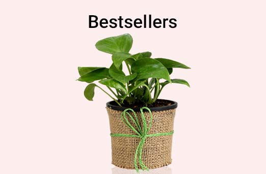 Plants Bestsellers Birthday