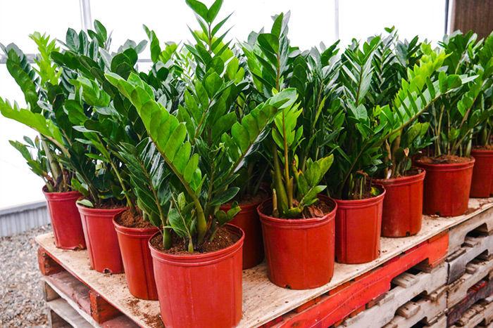 Indoor Plants That Crave Low Light Dark House Corners Ferns N Petals