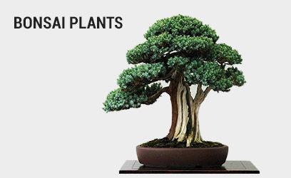 bonsai-plants