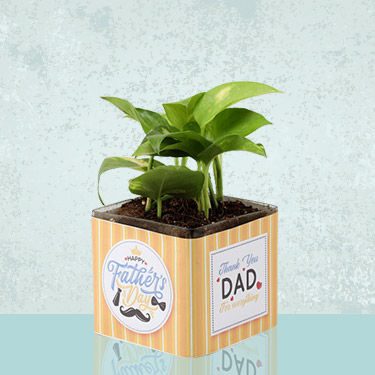 Plants for Fathers Day