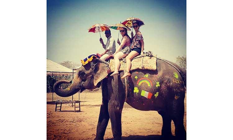Pet An Elephant