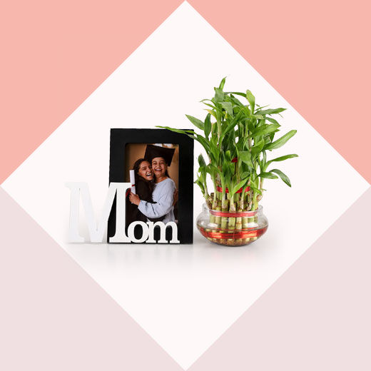 plants combo for mother's day