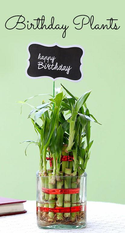 Bestselling Plants