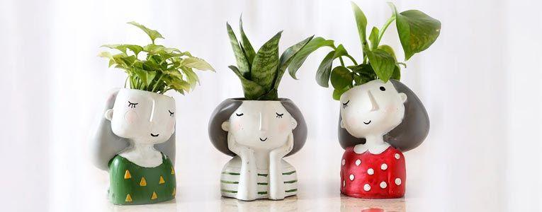 Love & Romance Plants