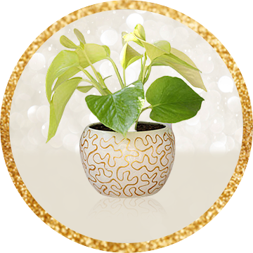 plant for new year