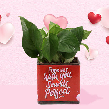plants for lovers