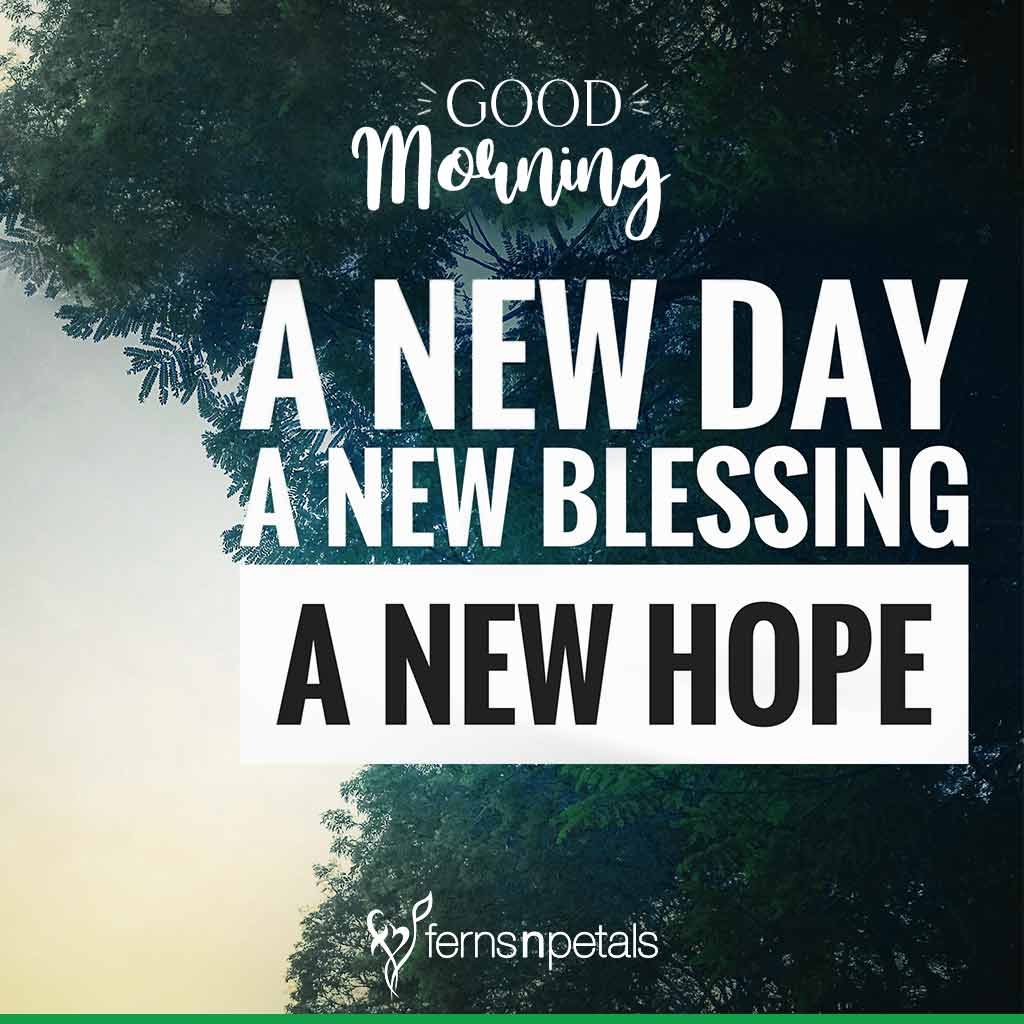 100 Good Morning Quotes Wishes Messages Images 2021 Ferns N Petals