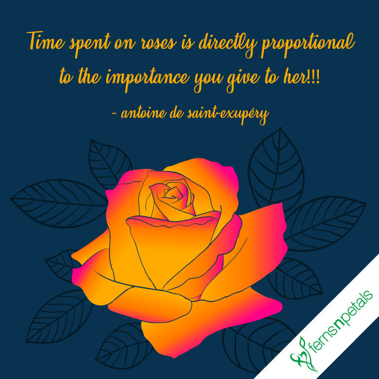 rose day best quotes
