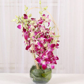 Send Orchid to USA