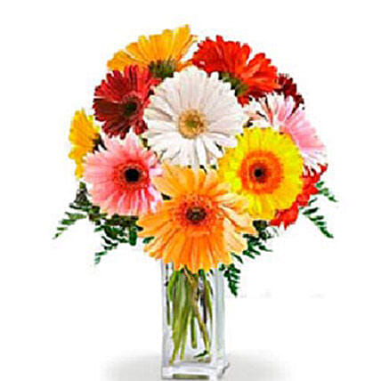 Gerbera Flowers Bunch