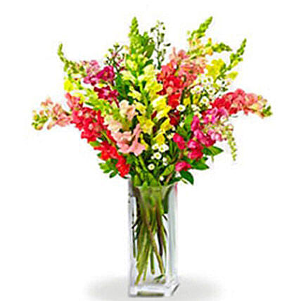 Rainbow Snapdragon:Canada Gifts for Birthday