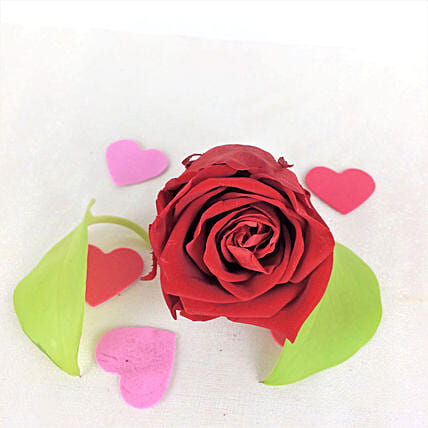Red Forever Rose In Box:Romantic Gifts to Canada