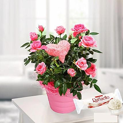 Pink Rose In A Pot With Ferrero Raffaello