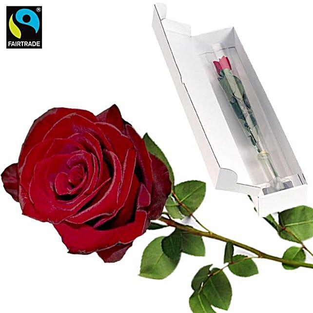 Red Long Stemmed Fairtrade Rose