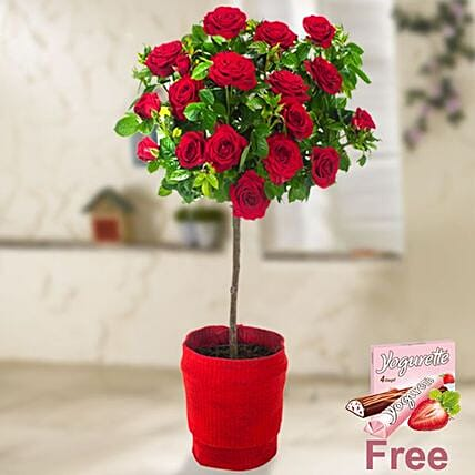 Red Rose Bush With Ferrero Yogurette:Valentine's Day Chocolates in Germany