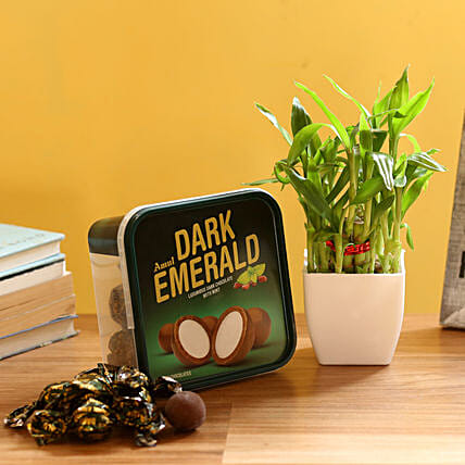 Plant with Chocolate Box:Send Lucky Bamboo for Anniversary