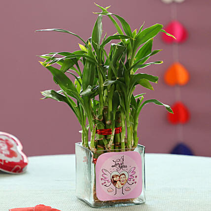 Bamboo Plant For Valentine's Day