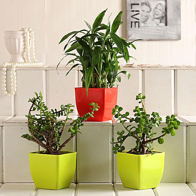 Plant Set Buy Online