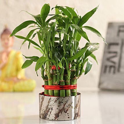 home decor indoor plant online