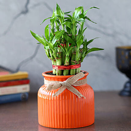 2 Layer Bamboo Plant In Orange Lining Pot:New Arrival Gifts