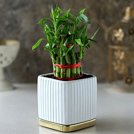 2 Layer Bamboo Plant In White Gold Plate Pot