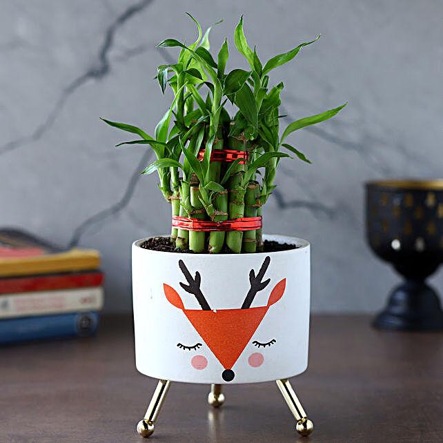 2 Layer Bamboo Plant In White Orange Reindeer Pot