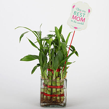 Online Two Layer Bamboo Plant For Mother's Day
