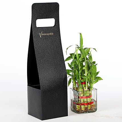 online bamboo plant for home décor:Good Luck Plants for Teachers Day