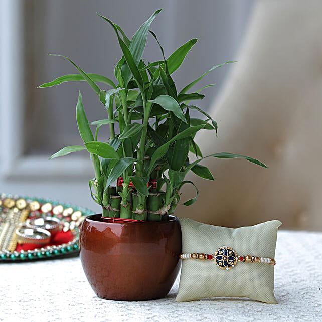 Premium Rakhi and Plant Online
