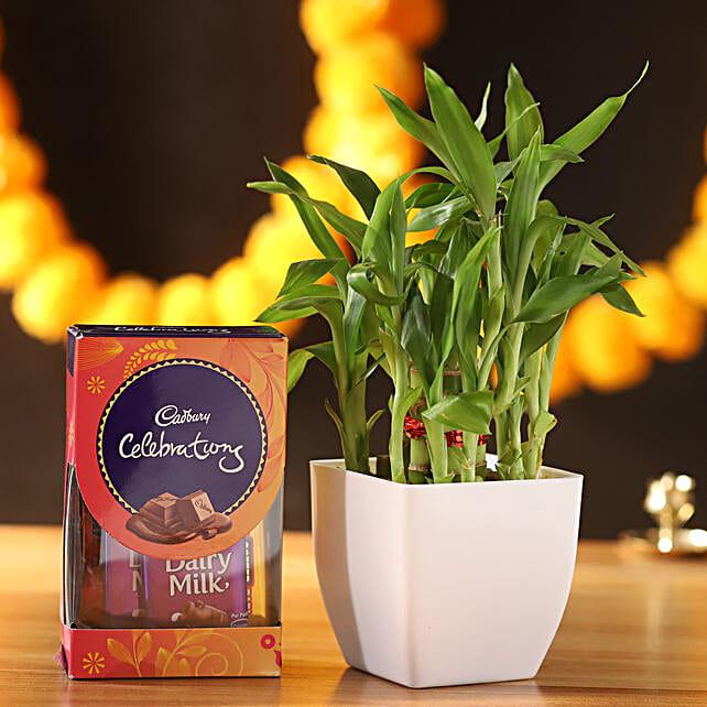 2 Layer Lucky Bamboo & Cadbury Celebrations:Order Plants n Chocolates