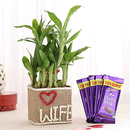 Chocolate & Printed Pot Plant For Wife Online